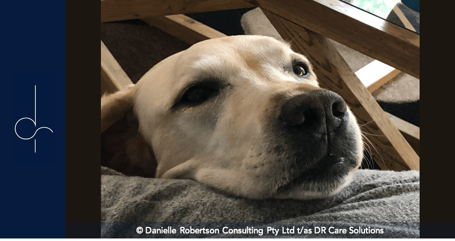 Living with Dementia: a Story by Mr Velvet Ears, Dementia Assist Dog